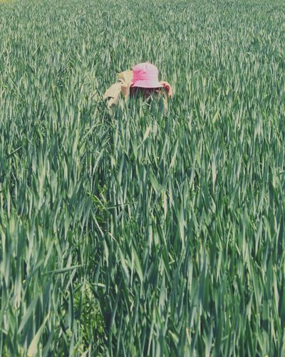 Person in field with pink hat