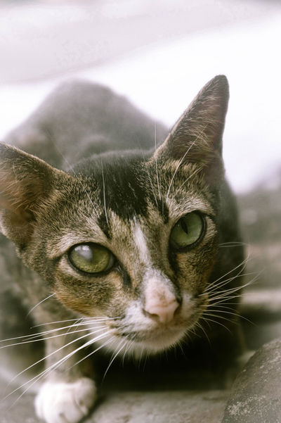 Domestic Cat Pets One Animal Animal Domestic Animals Animal Themes Feline Whisker Portrait Looking At Camera No People Mammal Water Close-up Day Indoors  Cat Photography Cat Kitten Tame Animals Sonyalpha Sonya3000 Alpha3000