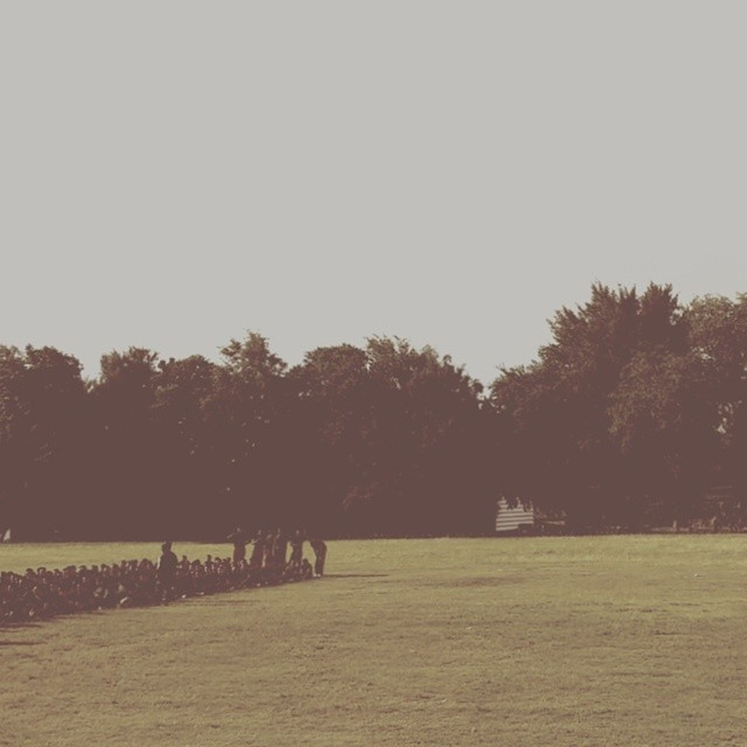 tree, clear sky, copy space, tranquility, tranquil scene, scenics, nature, landscape, field, beauty in nature, outdoors, growth, water, idyllic, sky, non-urban scene, silhouette, incidental people, grass