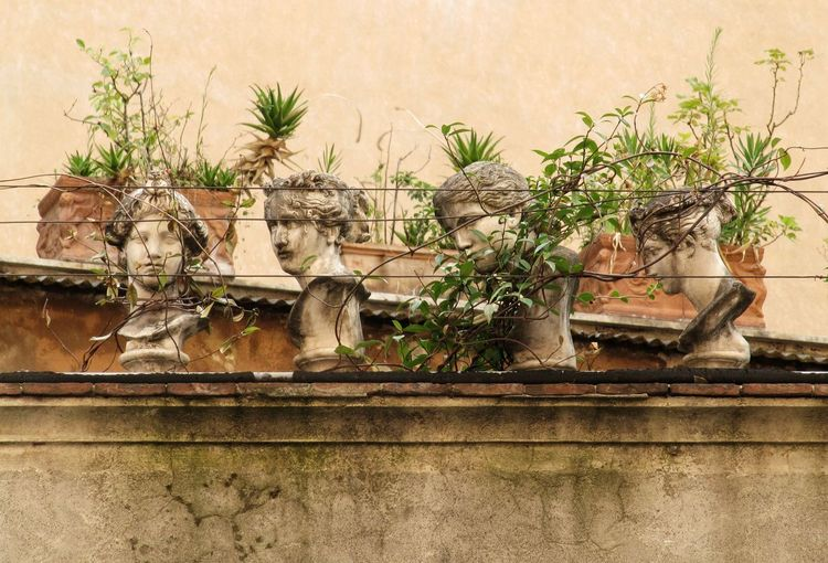 Palm Tree No People Plant Architecture Summer Travelling Old House Italien Italia Roma Italy Rome Rom Travel Destinations House Built Structure Abandoned Places Abandoned Close-up City Old-fashioned Statue Sculpture Neighborhood Map