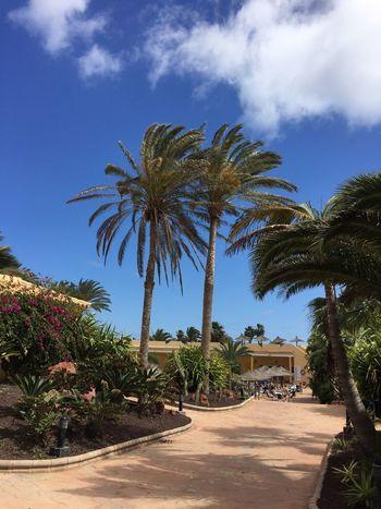 BYOPaper! Day Outdoors Fuerteventura Vacations Close-up Wege Lifestyles Grün Palmen Palm Tree Tree Wege Und Strassen Clear Sky The Great Outdoors - 2017 EyeEm Awards Hotel Life Hotel View Hotel Hotels In The World
