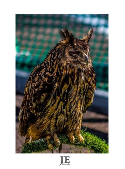 One Animal Bird Animal Themes Animals In The Wild Full Length Perching Day No People Focus On Foreground Close-up Outdoors Animal Wildlife Nature Bird Of Prey