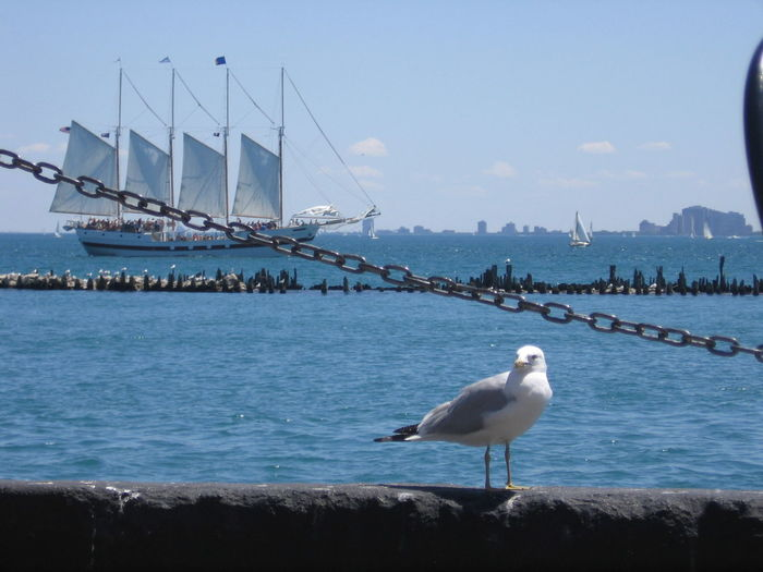 Animal Themes Bird, Sea Gull, Gull, Beach, Ocean, Shore, Summer, Sea, Coast Harbor One Animal Sailboat Sailor Sea Bird Zoology seagull, animal, one animal, sailing ship, water Sightseeing, Holiday Vacation Nature_collection Nature Photography Tranquil Scene Horizon Over Water Scenics Sea Vacations Holiday ship,