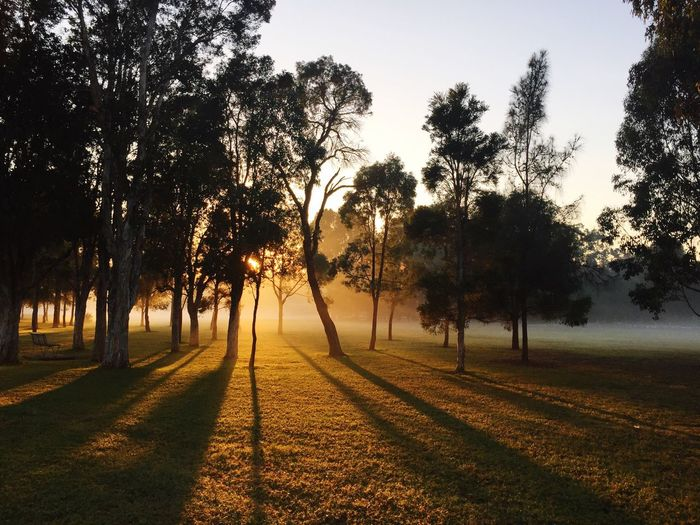 Foggy.. Scenics No People Beauty In Nature Outdoors Grass Shadows & Lights Foggy Morning Sunray Trees And Nature