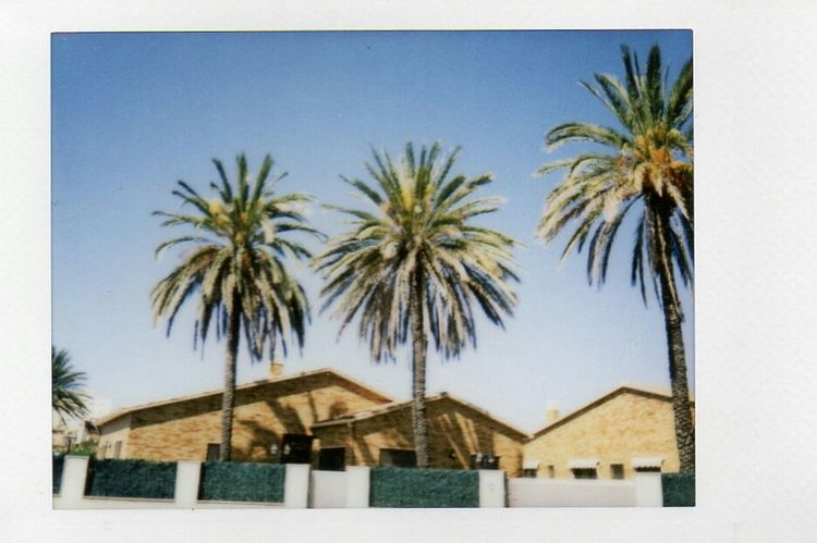 tree palms Palm Tree Outdoors Tree Building Exterior No People Built Structure Architecture Day Frond Instaxmini90 Fujiinstax Cunit