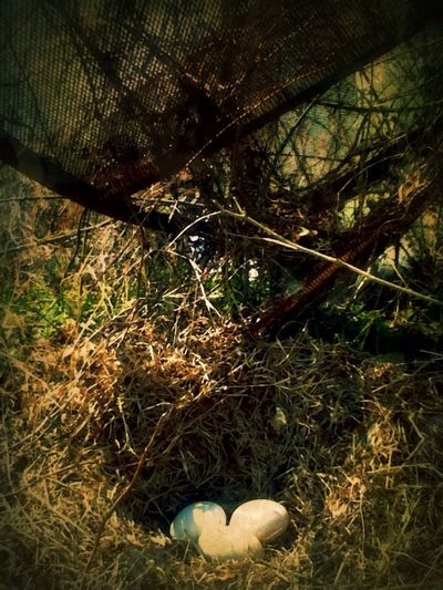 Score! Three duck eggs under a rusty old satellite dish. Rurex The Series Album EyeEm Nature Lover ¡Eyeem Addict!