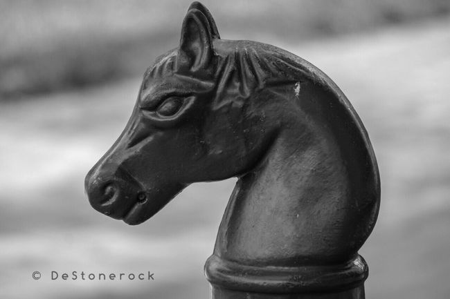 Statue Sculpture Traveling Testing Camera Camera Practice Photography Blackandwhite Taking Pictures Blackandwhite Photography Black And White B&w Modern Horse Horsehead