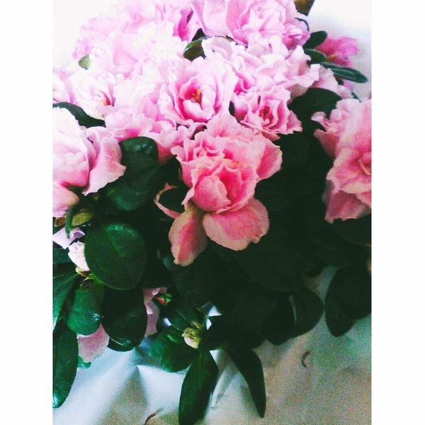 Naturalflower Withlove❤️ 😍😌😊