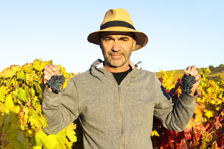 vineyards in autumn with the last bunches of grapes, wine grower man working , Bierzo , Spain Alcohol Autumn Autumn Colors Autumn Leafs Autumn Light Beverage Drink Fruit Gourmet Grape Vineyard Viticulture Wine Winemaking Winery