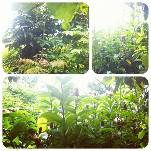 Đang du lịch trong vườn trời mưa thì nhặt đc quả na nhà trồng :(( Xúc động quá tôi đang ăn na dai mát lạnh ngoài vườn :((