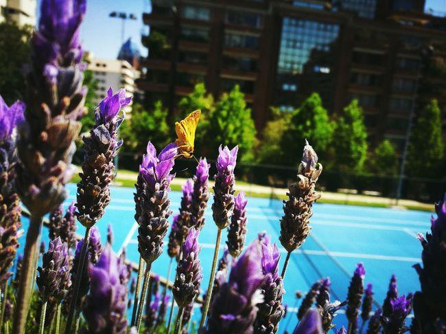 Fotolovers Momentos Inolvidables Santiago De Chile Pequeña Mariposa MuyFeliz Cadadíamejores Fotografiasenlacalle
