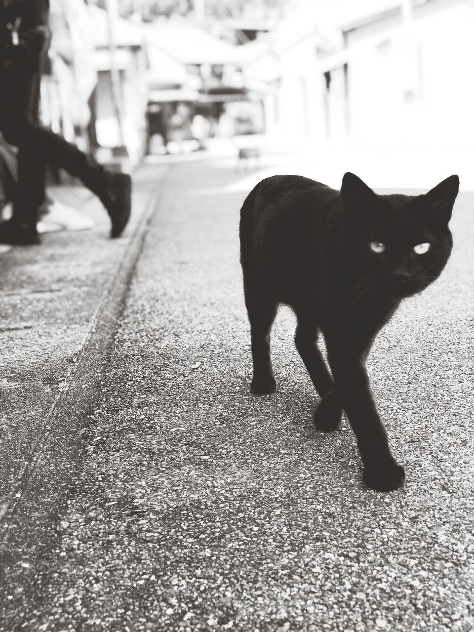 PORTRAIT OF BLACK CAT WALKING ON SIDEWALK
