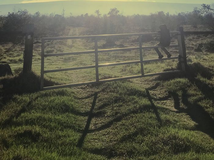 On the Fence Fences Nature Protection Tree Outdoors Grass No People Sunlight Beauty In Nature Day Sky