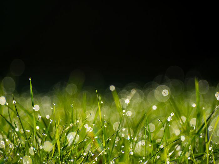 Close-up of grass on field at night