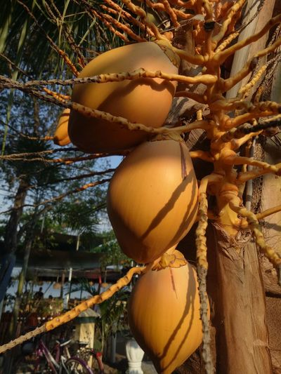 Pattern Pieces Growth Coconut Food Close-up Freshness Healthy Eating Outdoors Nature Fruit Tree