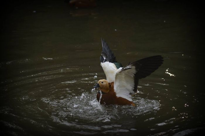 Nature Photography Bird Animal Themes Animals In The Wild Animal Wildlife l