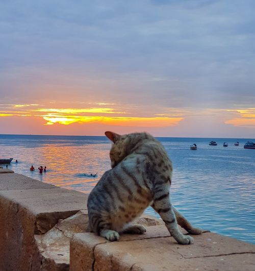 Cat looking at sea against sky during sunset