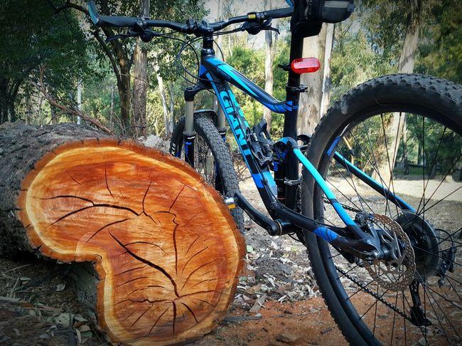 Un pequeño descanso despues de una buena pedaleada Bike Ride Morning Ride  Bike Blue Tree Tree Trunk Tree Splinter Bicycle Woods Leaves Ciudad Universitaria UNAM Mexico