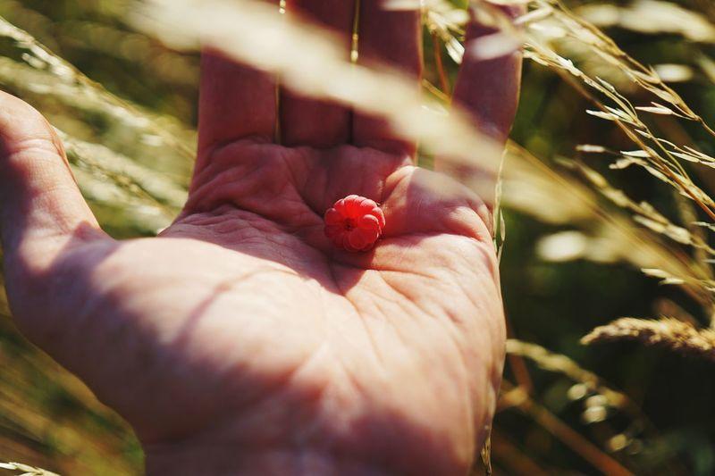 Yummy Raspberry