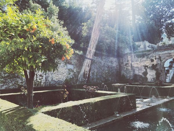 Orange Tree Tree Plant Sunlight Nature Growth Day No People Water