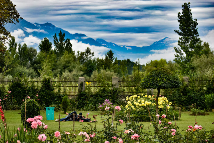 Scenic view of flowering plants and trees on field against sky