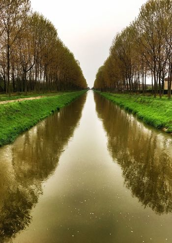Reflection Nature Tree Water Tranquility Beauty In Nature Tranquil Scene Symmetry Growth Scenics Sky Green Color Grass Clear Sky Outdoors No People Day Landscape