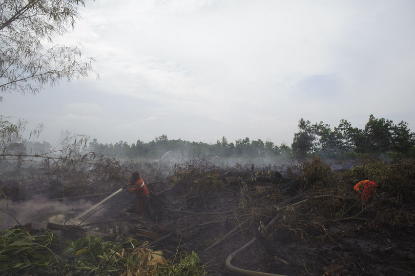 the atmosphere of the second day on Peat fires which conducted outages by manggala agni with the help of the police , TNI AD, BNPB, PT. Chevron and using 2 pieces of heavy equipment used to create reservoirs around fire flames in a village Air Hitam sub-districts Payung Sekaki Pekanbaru in Riau, 11 Aug 2016 Adi Sudarto Fire Fires Kebakaran Kebakaranhutan KebakaranLahan Kebakaranpekanbaru Kebakaranriau Peat Fires Pekanbaru Riau Indonesia