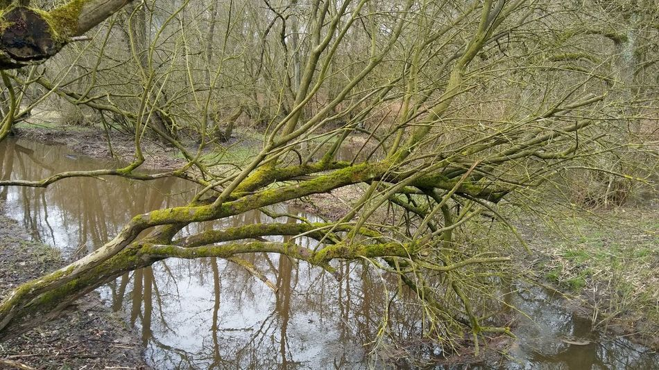 Tree Full Frame Close-up Sky