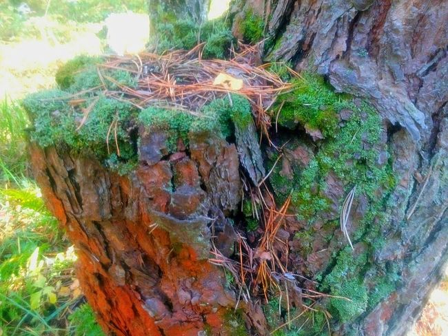 Tree Trunk Tree Growth Forest Rough Bark Close-up Nature Moss Branch Green Color Non-urban Scene Tranquility Brown Scenics Day Remote Outdoors Tranquil Scene Woods
