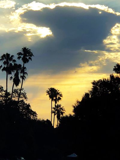 Sunrise Sky Tree Silhouette Plant Sunset Beauty In Nature Cloud - Sky Palm Tree Nature