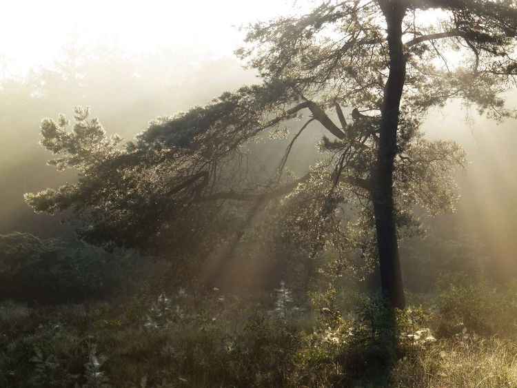 Tree Forest Spectacular Special👌shot Special Light Sunrays Sun And Trees