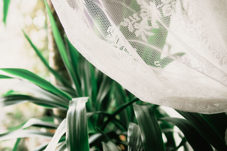 Tea Time, somewhere at the North Sea. Old-fashioned Palm Tree The Week On EyeEm Cafe Close-up Curtain Day Grandma's House Growth Leaf Nature No People Old Outdoors Plant Tea Time