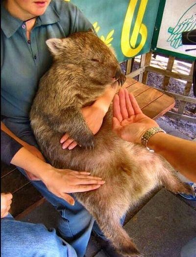 West Australia Big Mouse Travel Photography Australia & Travel Australia Zoo