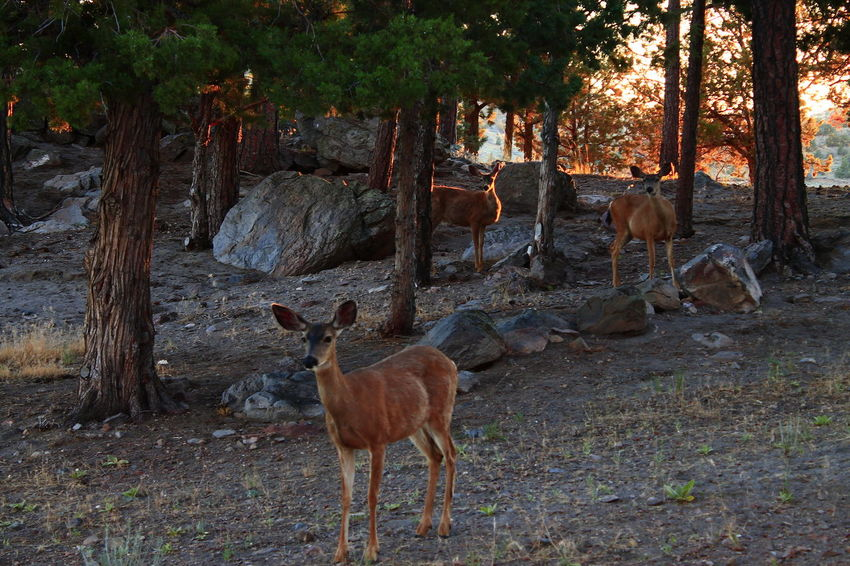 Nature Photography Deer Wildlife & Nature Mountains Outdoors Outdoor Photography A.M.Marasco Diamond Mafia Studios Diamond Mafia Photography