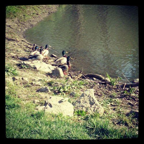 Ducks! @nzjayzee Thugs Hungry Loud