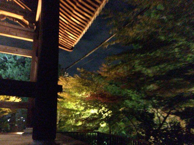 Autumn Leafs Kyoto Autumn Kyoto Autumn Light Kyoto Autumn Night Kyoto,japan Kyoto Night Autumn Leaves Kyoto, Japan Kyoto Autumn