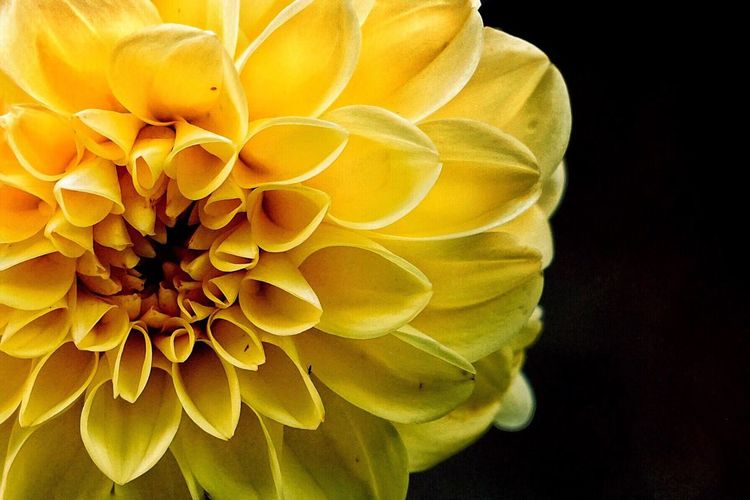 Flower Fragility Petal Yellow Beauty In Nature Close-up Nature Flower Head Freshness No People Day Outdoors