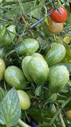 Close-up of fruits at market