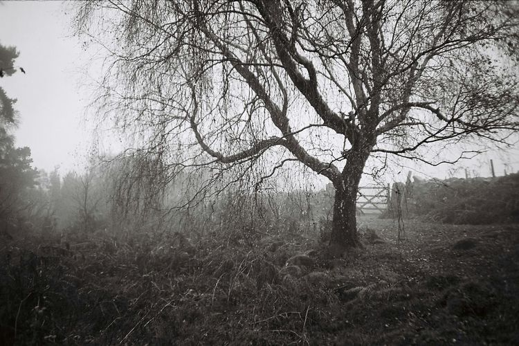 Creepy Landscape Derbyshire death Fog Nature Branch Beauty In Nature Tranquility Outdoors Tree No People England Countryside England Nature Trees gothic Spooky Atmosphere Spooky Trees Spooky