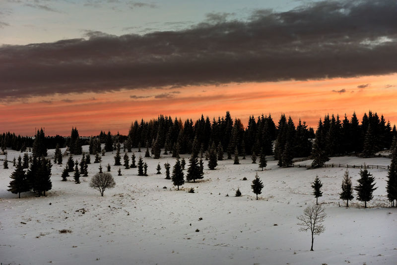 Winter sunset in the mountains. Colored sky Fir Tree Snow ❄ Sunset_collection Winter Winter Vacation Wintertime Beauty In Nature Cloud - Sky Fir Trees Nature Orange Color Outdoors Scenics Sky Snow Snowy Mountains Sunrise Sunset Sunset Mountain Tranquil Scene Tranquility Tree Winter Holidays Winter Trees Winter Wonderland