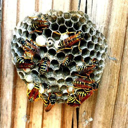 Found this little wasp nest at work. Wasp Wasps Wasps Nest Wasp Nest Wasp At Work Insect Insects  Insect Photography Bug Bugs Nature Nature Photography Outdoors Outdoor Photography Outside