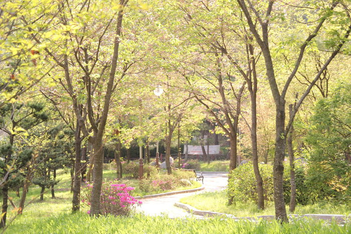 Beauty In Nature Branch Day Flower Grass Green Color Growth Nature No People Outdoors Outdor Scenics Seongnam Summertime Tranquil Scene Tranquility Tree