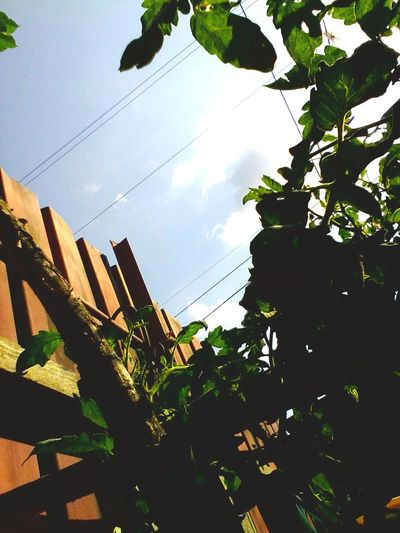 @wolfzuachis Eyeemphoto Eyeem Market Wolfzuachis Ionitaveronica No People Low Angle View Cable Power Line  Sky Power Cable Leaf Growth Outdoors Plant Day Fence Metal Fence Metalic Fence Garden Plants Green Backyard On Market Premium EyeEm Selects