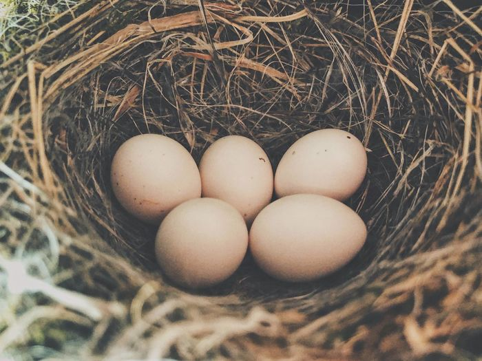 Bird Nest Nest