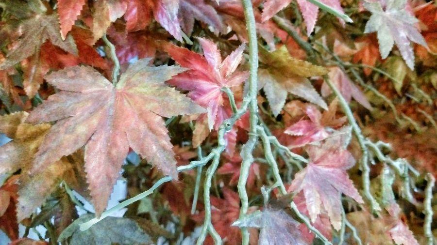 A lot of Leaf .