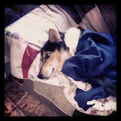 Beautiful Princesa Dog Fofinha