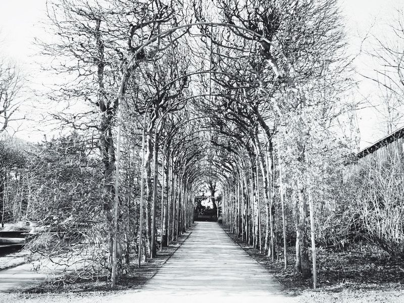 Tree Alley Blackandwhite Photography The Way Forward Day No People Nature Indoors