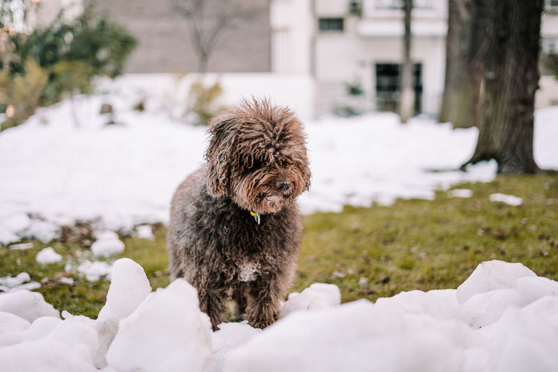 View of a dog on snow covered field