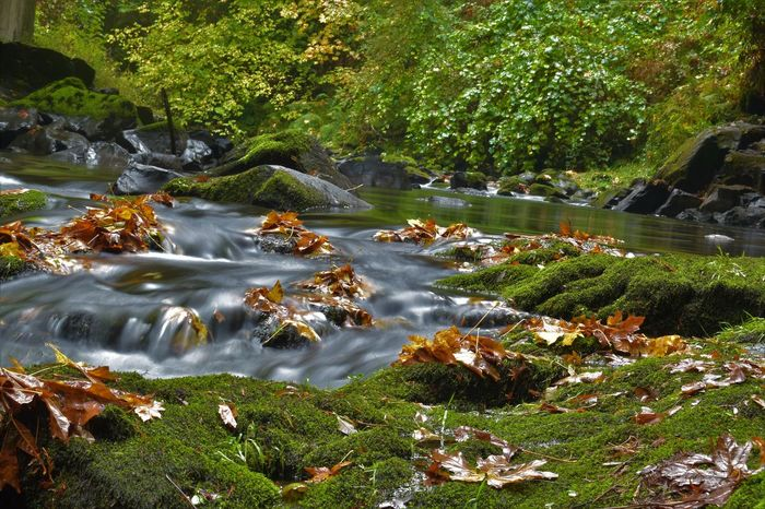 Beauty In Nature Day Forest Freshness Grass Growth Long Exposure Motion Nature No People Outdoors Plant River Rock - Object Scenics Tranquility Tree Water Waterfall