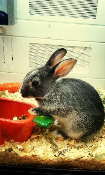 Bunny  Rabbit Petstore Cute